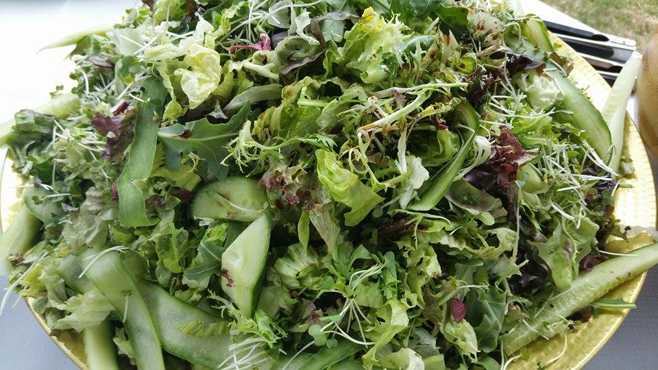 Fresh Green Salad